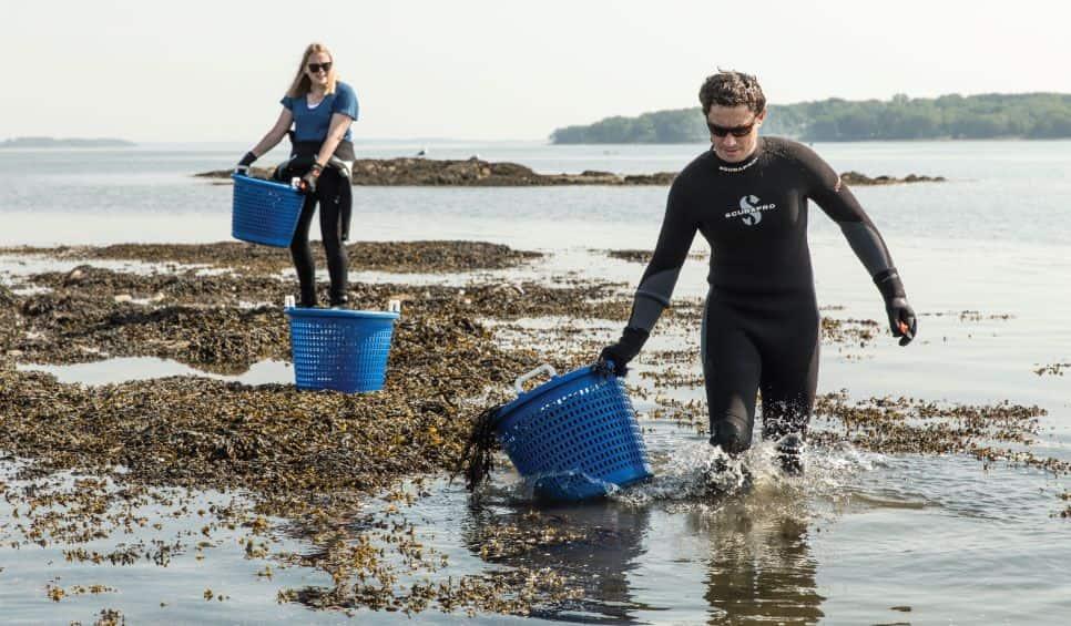 Seaweed_Harvest