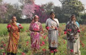 Organic_India_Farmers